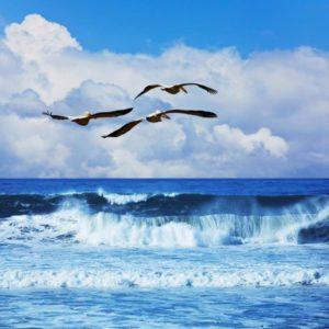 Hav og fugler