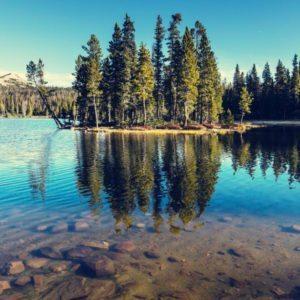 Skog og vann